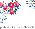 椿 wallpaper background watercolor illustration 36972937