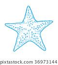 Hand drawn marine Starfish 36973144