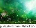 beauty, butterfly, flower 36974127