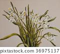 水仙 水仙花 花朵 36975137