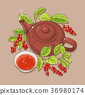 cup of schisandra tea and teapot 36980174