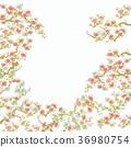 수화 무늬 매화 배경 36980754