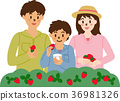 strawberry, picking, family 36981326