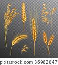 Realistic Cereals Transparent Background Set 36982847