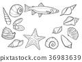 Hand drawn Seashell 36983639