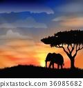 大象 公园 天空 36985682
