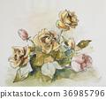 장미 꽃 36985796