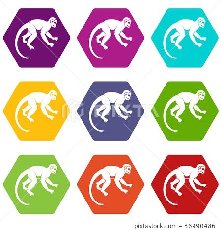 Capuchin monkey icon set color hexahedron 36990486