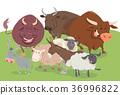 農場 農場動物 卡通 36996822