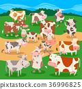 農場 農場動物 卡通 36996825