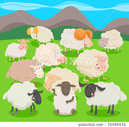 flock of sheep characters cartoon illustration 36996836