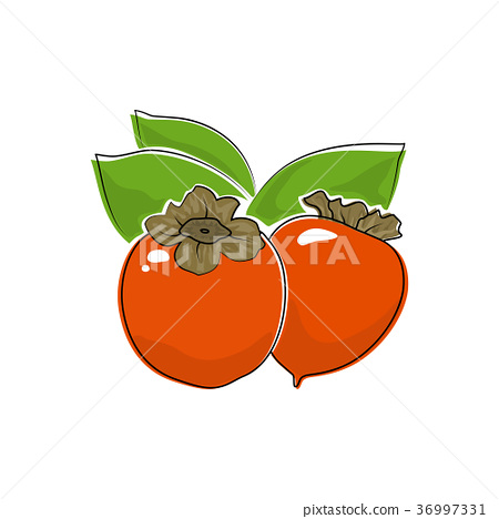 Persimmon Isolated on White 36997331