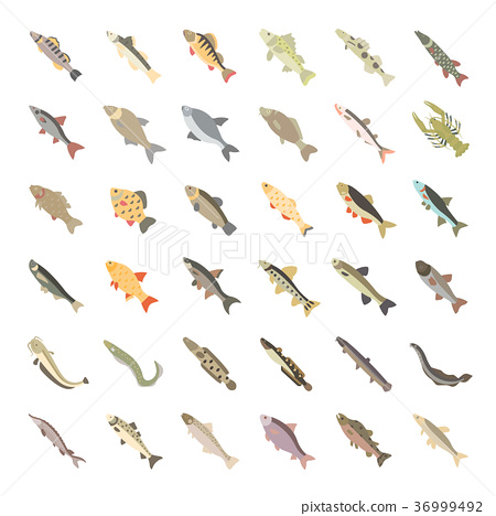 Set Vector Flat Icons of Freshwater Fish 36999492
