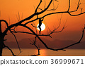 leafless, trees, silhouette 36999671