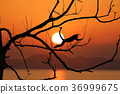 leafless, sunset, red 36999675