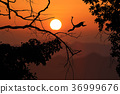 leafless, trees, silhouette 36999676