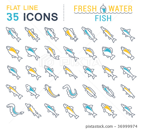 Set Vector Line Icons of Freshwater Fish 36999974