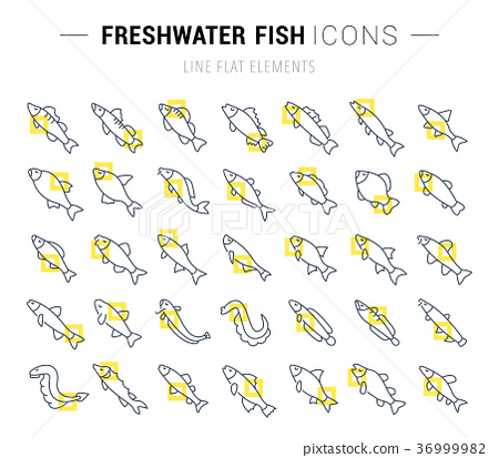 Set Vector Line Icons of Freshwater Fish 36999982