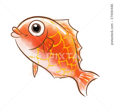 Red snapper 37006486