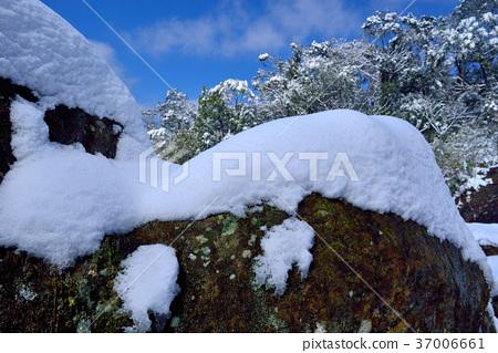 雪景,下雪,鄉野,視野,山,冬季,冬天,森林,樹,臺灣,桃園,新鮮,自然 37006661