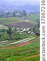 시골, 계단식 논, 아시아 37007236