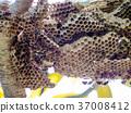 蜂房 蜂窩 窩 37008412