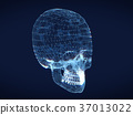 shining dots and line of skull 37013022