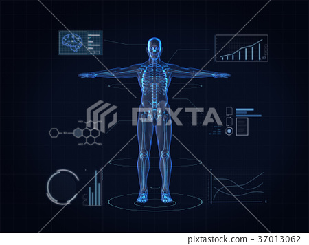 Hologram Human anatomy and skeleton,3D rendering  37013062