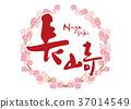การคัดลายมือ,ดอกซากุระบาน,ซากุระบาน 37014549