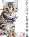 cat, playful, pet 37020704