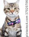 cat, playful, pet 37020706