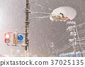 transport, heavy snow, traffic light 37025135