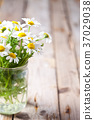 chamomile bouquet in jar 37029038