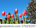 Funabashi Andersen Park, Ice Tulip and Christmas Tree in the Event Square (December) Funabashi City, Chiba Prefecture 37029297