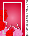 Paper art style of Rose flowers and frame 37037778