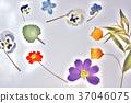 花朵標本 繪畫 圖畫 37046075