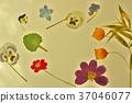 花朵標本 繪畫 圖畫 37046077