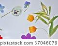 花朵標本 花朵 花 37046079