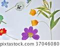 花朵標本 花朵 花 37046080