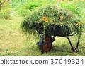 정원 일, 정원 잔디 깍기, 청소, 잔디와 공주 해바라기 37049324