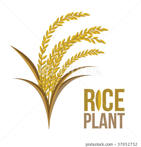 rice plant on white background vector stock illustration 37052732 pixta rice plant on white background vector