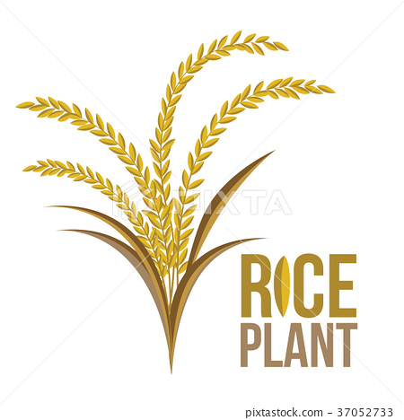 rice plant on white background vector stock illustration 37052733 pixta rice plant on white background vector