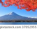 후지산, 가을, 단풍 37052955