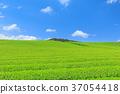 茶園 富士宮市 翠綠 37054418