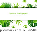 tropical, leaves, background 37056588