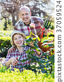 Senior couple looking after flowers in the garden 37059524
