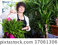 Assistant showing basket with fern 37061306