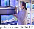 Girl in aquarium and goldfish store looks at aquarium seaweed 37062411