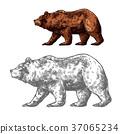 짐승, 곰, 동물 37065234