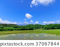 rice, crop, cultivation 37067844